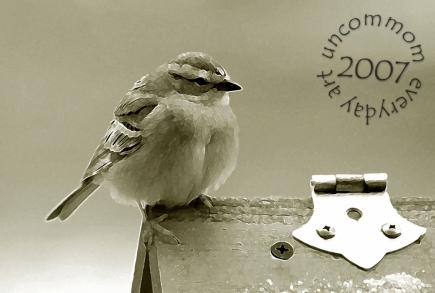 SA B0703S Sepia Sparrow