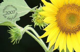 SA F0703S Afternoon Sunflower