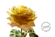 SA F0904R Peace 09