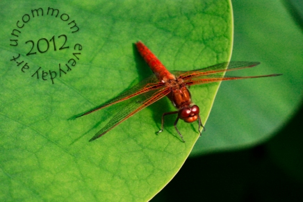 SA F1202D Red Dragonfly on Lotus Leaf