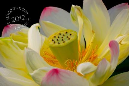 SA F1206W Yellow Lotus