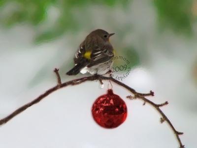 SA C0903 christmas bird 1000