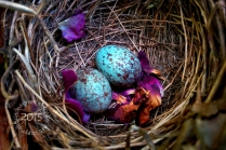 Birds nest in roses